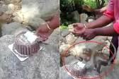 印度一家人庆祝生日时被猴子抢走整个蛋糕