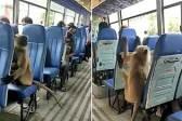 坐稳扶好!印度一猴子坐公交车 乘客表现淡定