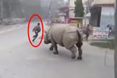 巨兽游街!犀牛走上尼泊尔街道险些冲撞路人