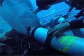潜水者在斐济被虎鲨咬住头 撕坏氧气面罩