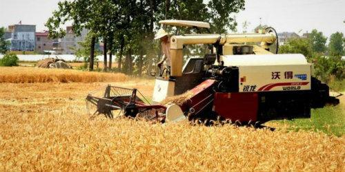 安徽迎来小麦黄金收割期