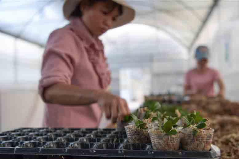 海南规划2025年花卉种植总面积达50万亩