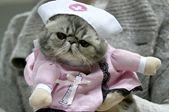 白俄罗斯举办冬季猫展 儿童排队抚摸小猫咪