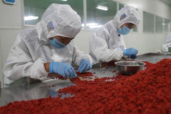 宁夏同心:枸杞产业助农脱贫致富