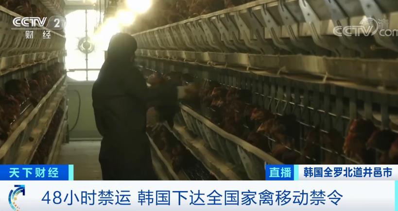 "allbet(allbet6.com):危急警报升至""严重""!时隔2年多,高致病性禽流感疫情又现!韩国扑杀40万只鸡鸭… 第5张"