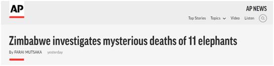 """津巴布韦也出现大象""""神秘""""死亡事件,..."""