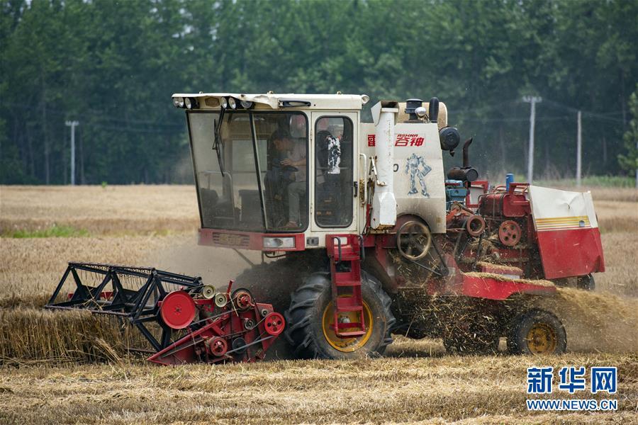 小麦收割忙