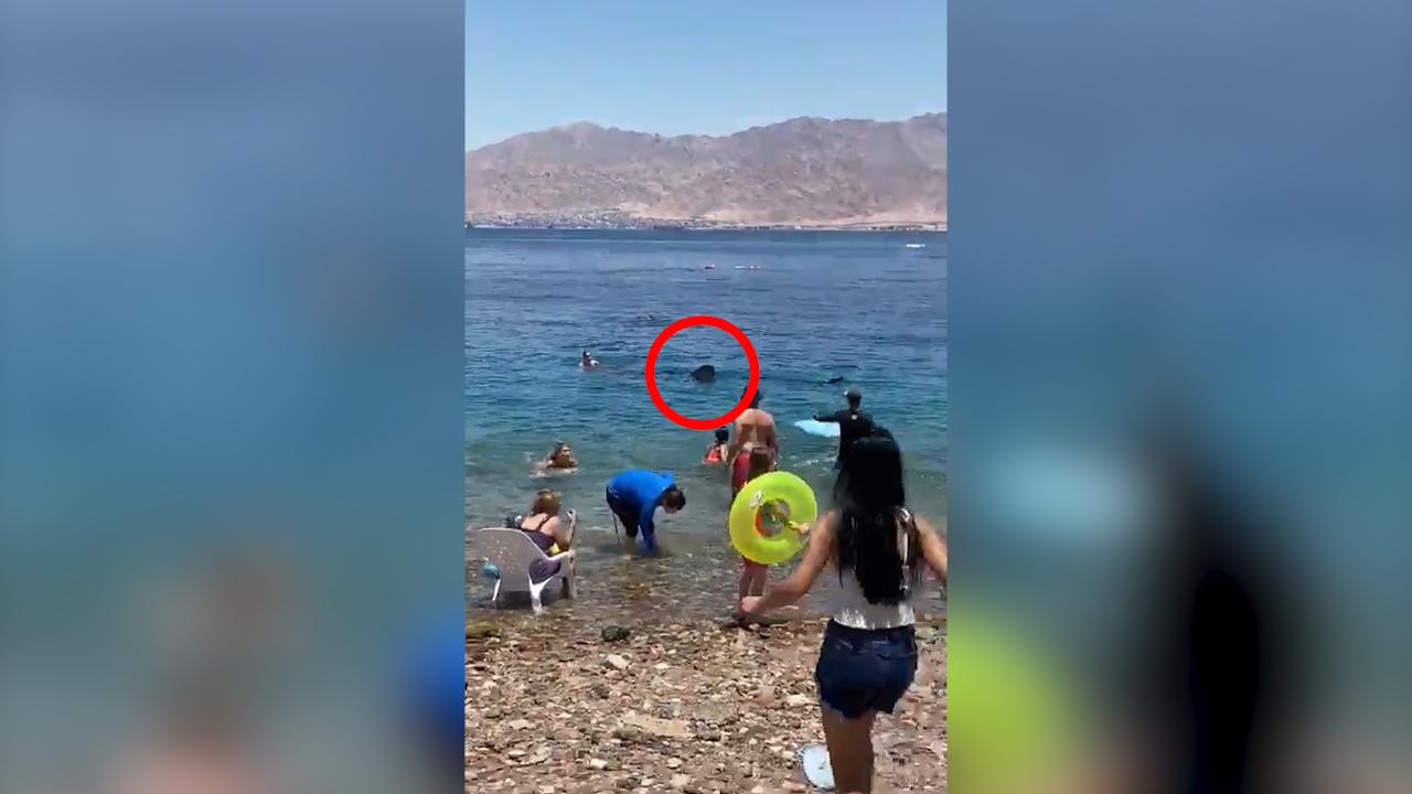 海面出现巨大鱼鳍游客被吓得逃离上岸专家:是无害鲸鲨