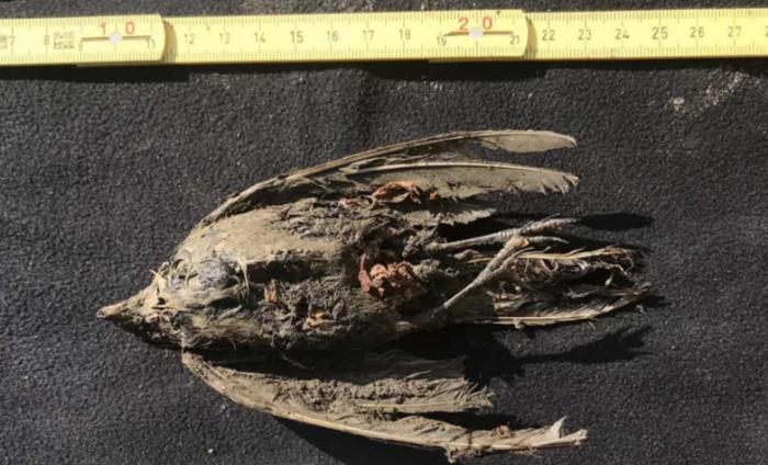 科学家发现被冷冻了约46000年的古代鸟类遗骸