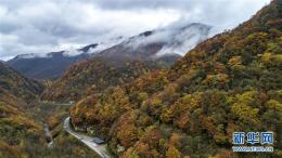 七彩斑斓的神农架的秋