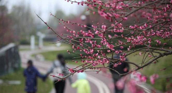 贵阳市部分公园陆续恢复开放