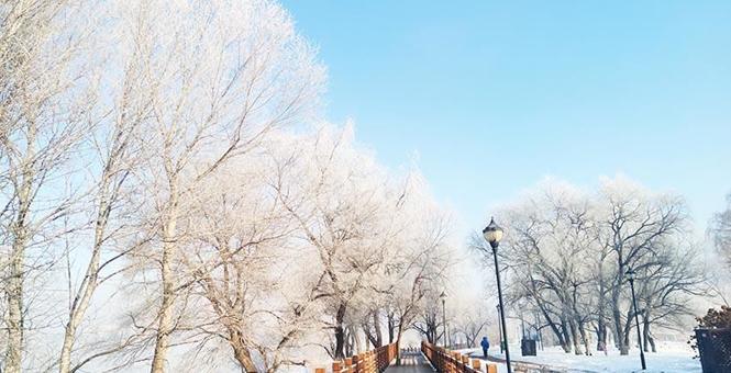 """吉林""""雾凇驾到"""" 结晶爬上树枝宛如梦幻之地"""