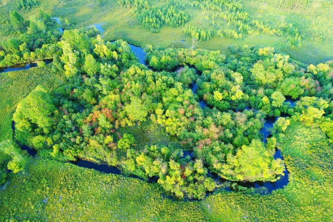 "usdt第三方支付(caibao.it):BBC:中国植树造林的作用""被低估了"" 第2张"