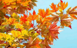 最美秋季已上线!金秋十月,漯河这些地方的枫叶分外妖娆