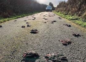 """英国一乡村道路上数百只欧椋鸟尸体""""从天而降"""""""