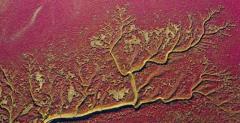 辽宁盘锦潮水冲刷滩涂形成树痕印滩涂自然奇观