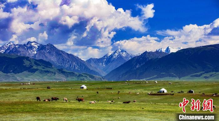 新疆草原最美盛夏时光晨雾弥漫牧歌悠扬