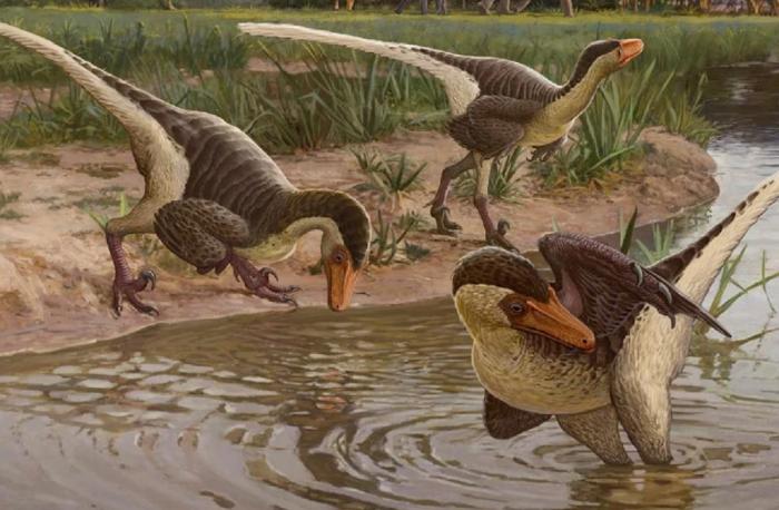 """研究称""""最后的猛禽""""恐龙可能拥有羽毛和尾巴"""