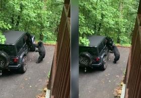 美国一只黑熊打开车门被车主喝止后立刻关上