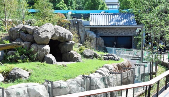 皇冠足球:旅日大熊猫搬新家:重现四川自然风光 日媒称促进滋生 第2张