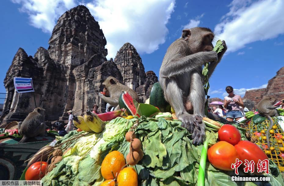 """泰国举办年度""""猴子自助餐节"""" 众猴吃吃喝喝嗨爆了"""