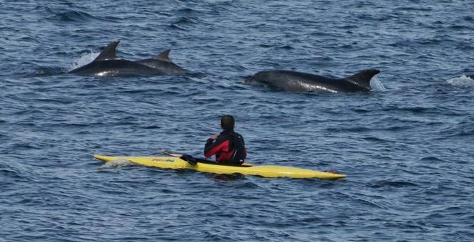 英男子乘坐皮划艇划船偶遇海豚组团游泳画面和谐