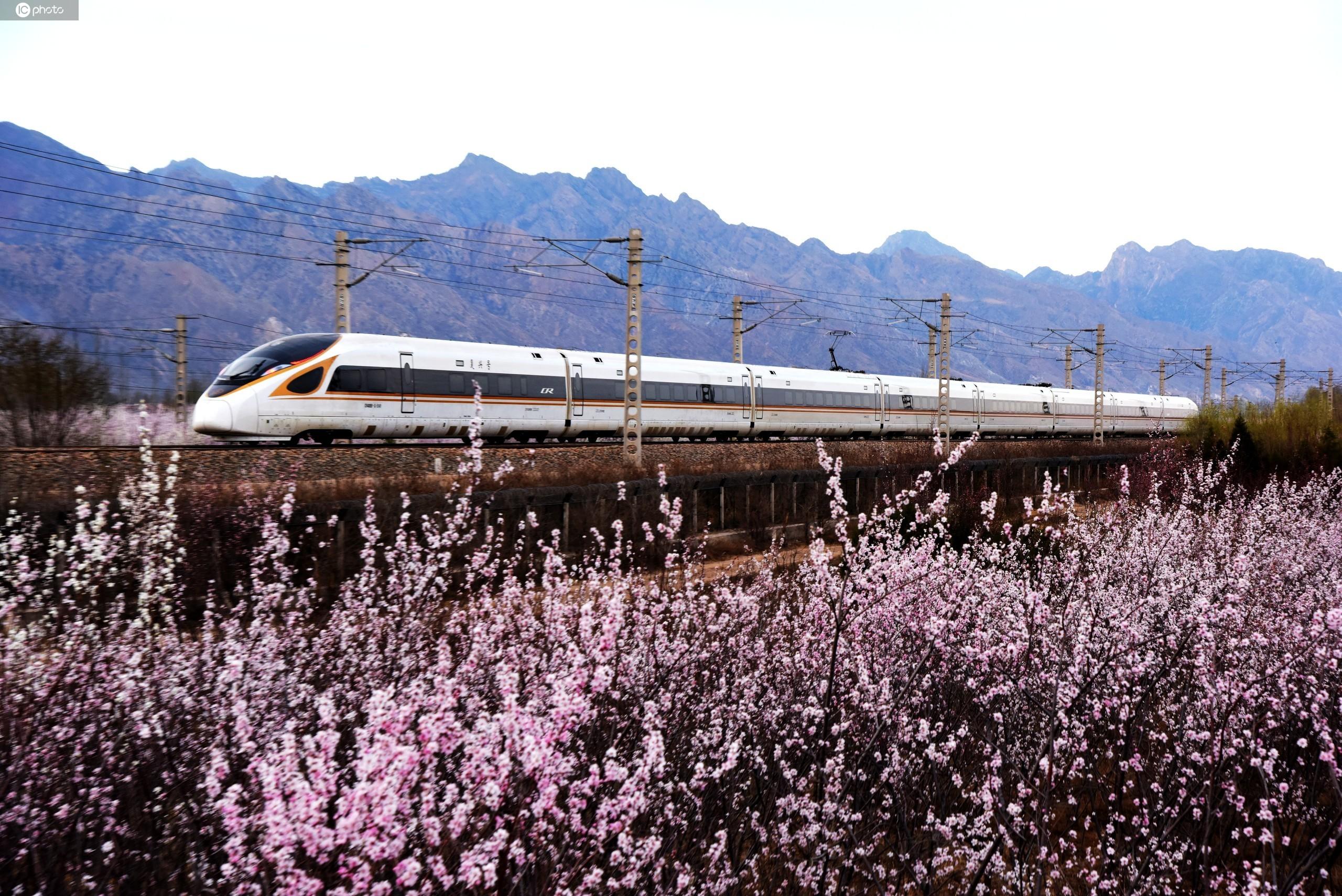 京呼高铁复兴号列车飞越花海美景如画 春意盎然