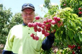 花5000澳元从中国买了一棵荔枝树澳洲一农民现成功培育出无核荔枝