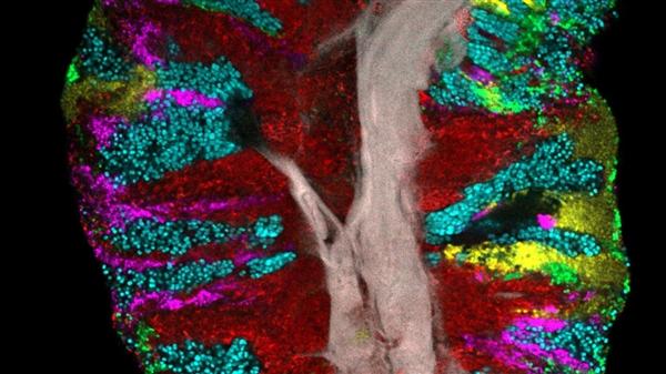 新研究揭示了我们住在舌头上的微生物并不是随机混合在一起的
