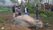 惨案!印度一头大象在跨越铁轨时被火车撞死