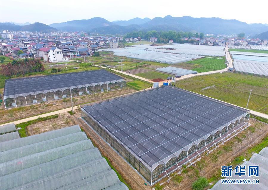 福建水南:做强做优葡萄产业 推动乡村产业振兴