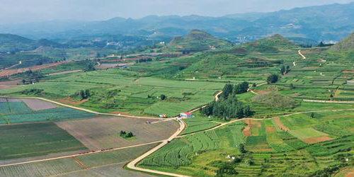 贵州威宁:青山绿水出好菜