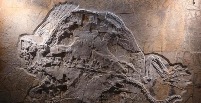 德国展出侏罗纪时期海龟化石 吸引众多游客参观