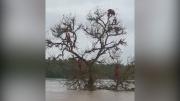 猴群被洪水围困在树上两天 印度政府出动救援