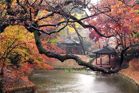 雨中看红枫韩国宫殿内秋色美不胜收