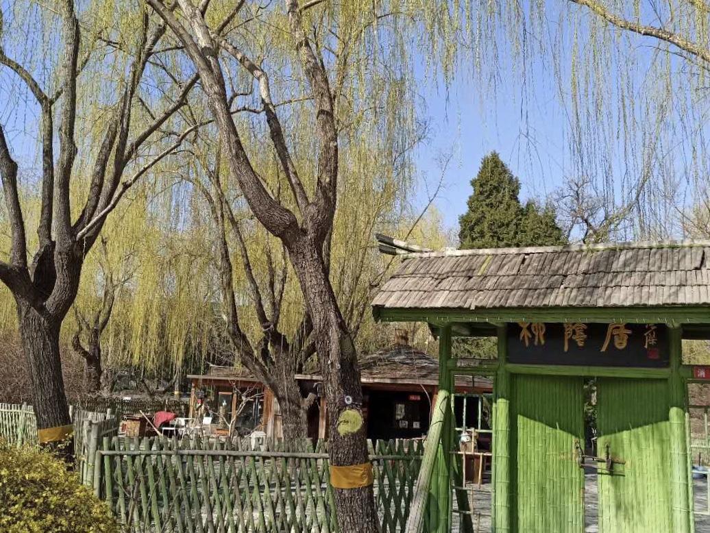 云游中国|柳荫公园春景浓郁