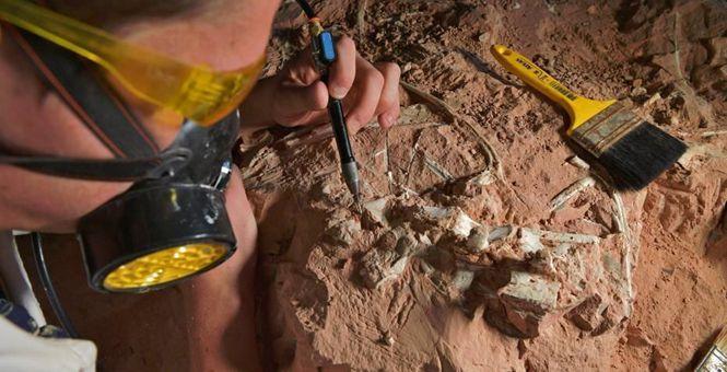 巴西南部出土三疊紀時期的恐龍化石