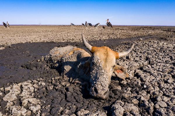 令人窒息!摄影师拍摄非洲恩加米湖即将干涸景象