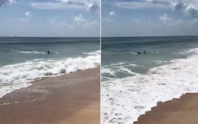 美国一海滩鲨鱼出没孩子就在不远处玩沙子