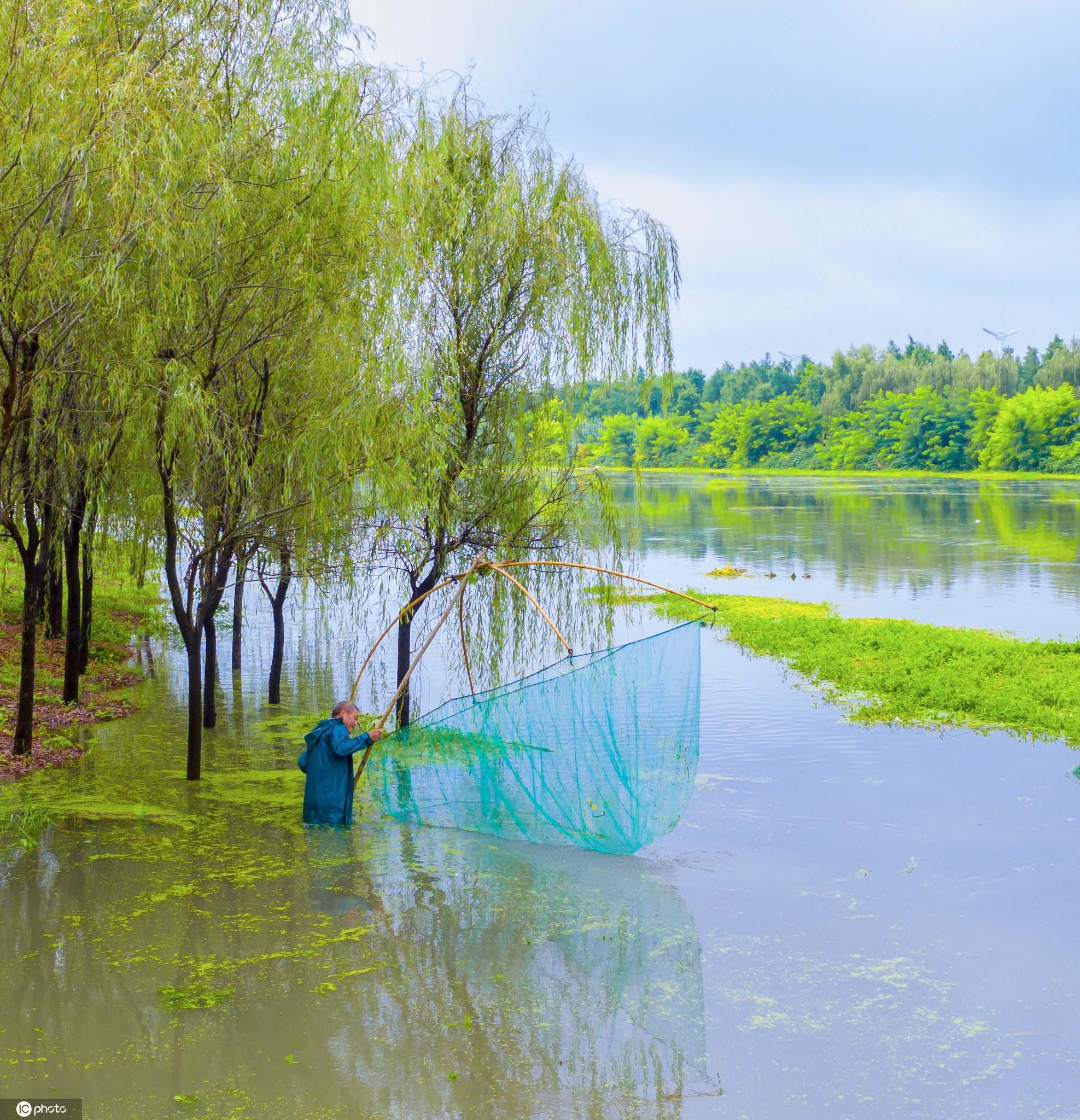 江苏泗洪:暴雨过后村民捕鱼乐