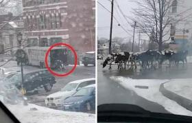 美国一运牛卡车大门被打开?行驶中牛一头一头跑掉