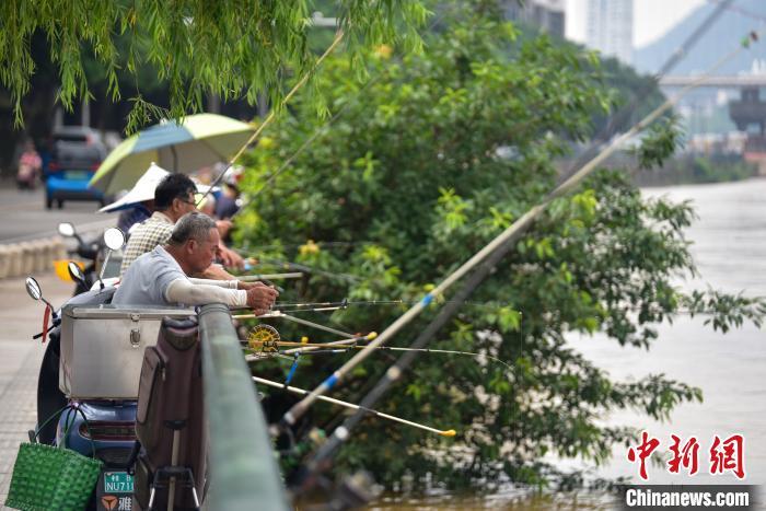 广西柳州洪水漫上道路 市民钓鱼捞鱼取乐