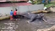 疑似因杀死寺里高僧新德里一头大象被人绑住鞭打
