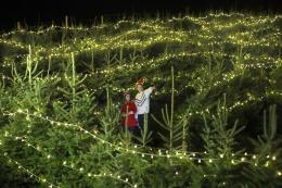英国农场圣诞树迷宫