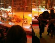 俄罗斯一马戏团表演途中三只狮子突然开打观众惊慌逃跑