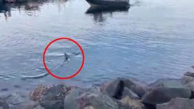 """澳码头现鲨鱼距人仅几米居民提醒""""小心跌倒"""""""