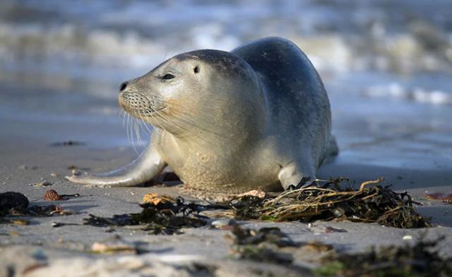 纳米比亚海岸惊现7000多具海豹遗体,大量幼崽胎死腹中 第2张