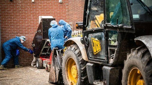 大发:西班牙一农场8成水貂熏染新冠病毒,近10万只将被宰杀 第3张