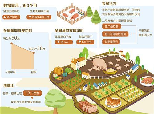 规模养殖产能持续释放:肉价连降 后市难再大涨