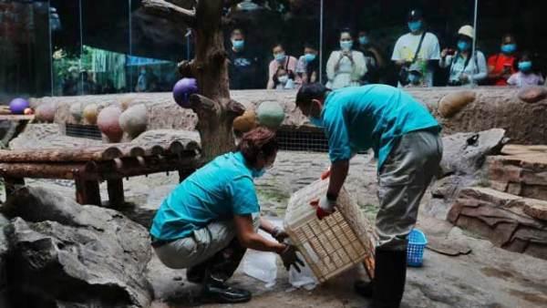北京动物园饲养员主动加班给动物防暑
